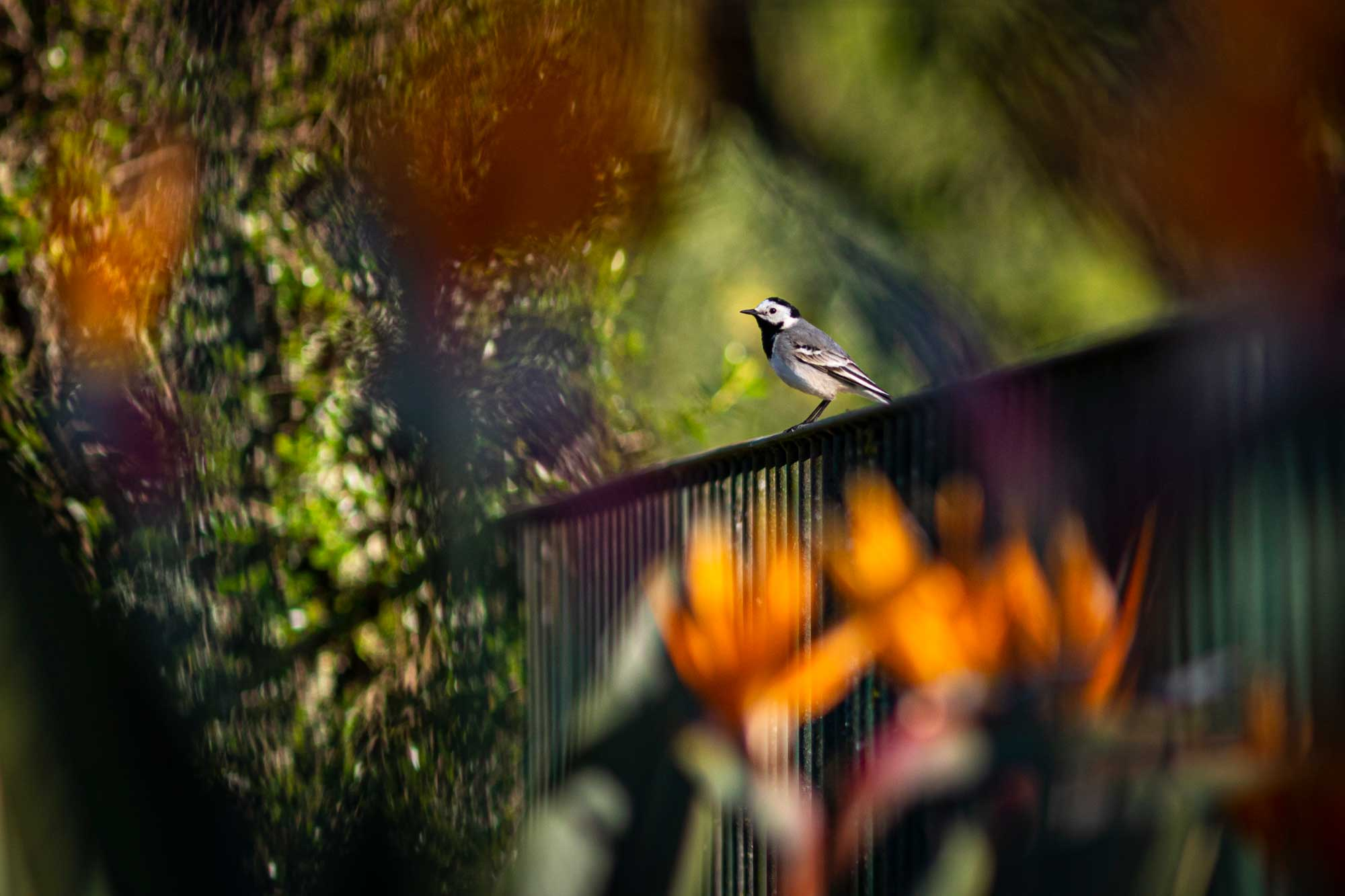 Bird in the garden